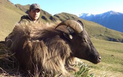 NZ Tahr