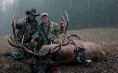 Wyoming Elk 2