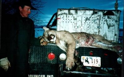 Wyoming MT Lion 2